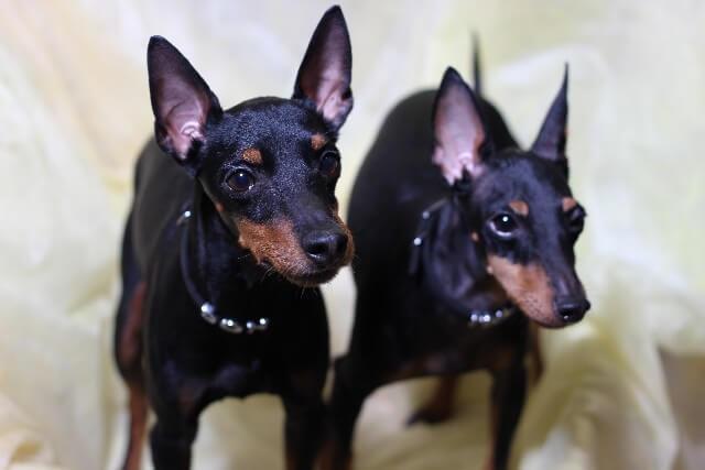 2匹並んだイヌ