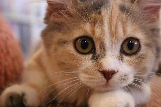 真剣な顔の猫